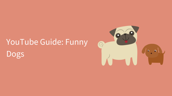 YouTube Guide- Funny Dogs social connections